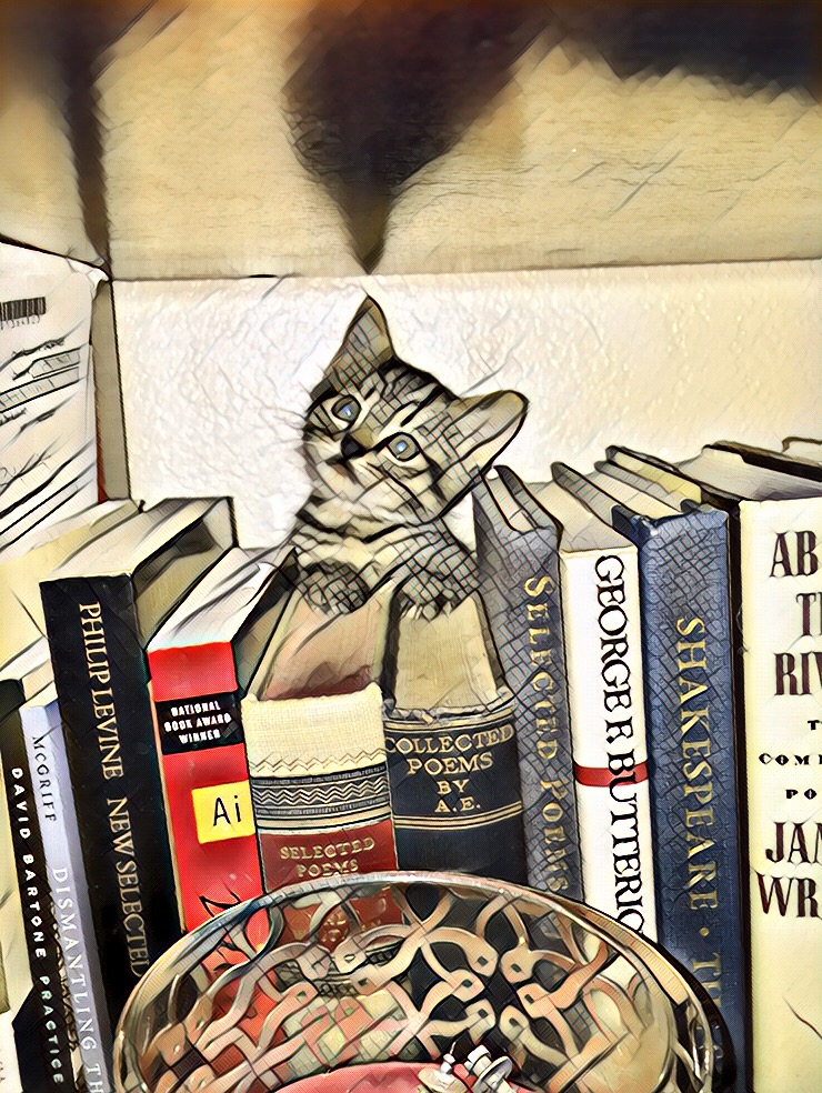kitten with poetry